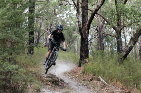 Person riding a mountain bike through the forest