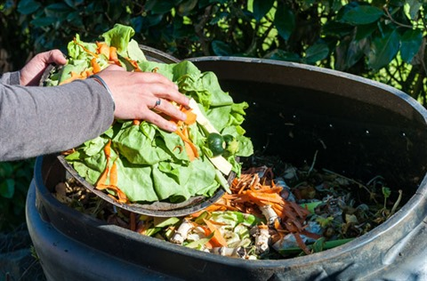 person putting vegetable scraps in the compost bun